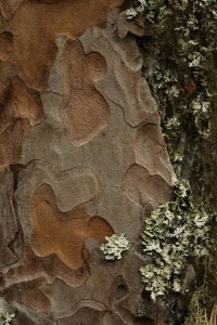 Changing the framing of the photo on this section of the bark gives a different, but equally aesthetic image.