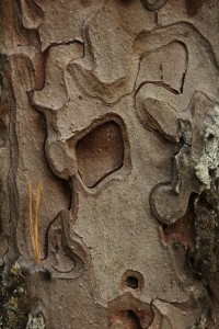 This section of the bark is another work of natural art, complete with a hole through one of the layers.