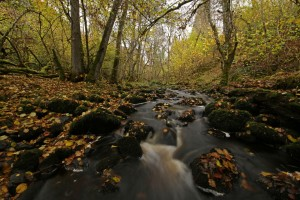 Upstream view of the small burn at Inverfarigaig, with fallen hazel leaves covering the ground.