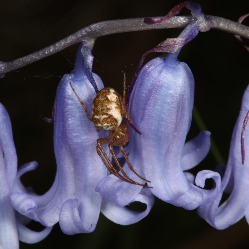 Unseen biodiversity of Glen Affric, part 1