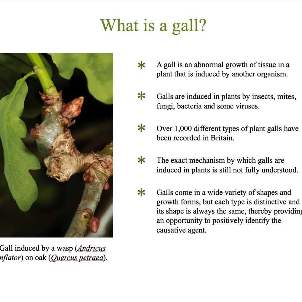 An Introduction to Plant Galls