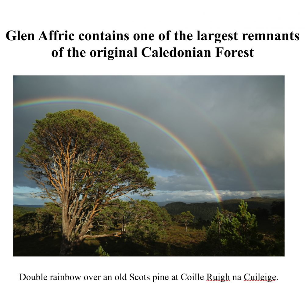Glen Affric: a vision for a wild forest