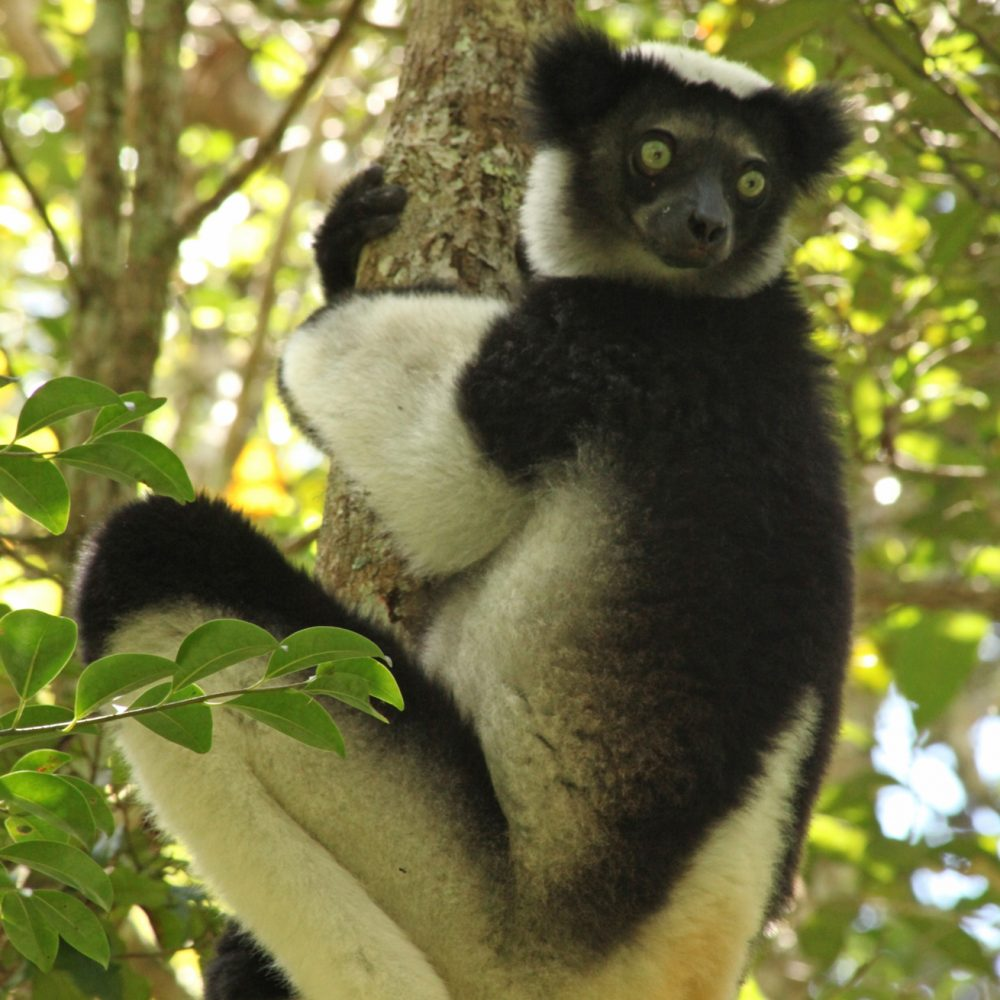 Magic and mayhem in Madagascar