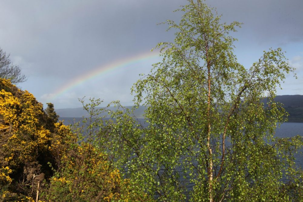Rainbow, birch trees, gorse in flower, Loch Ness, Scotland.