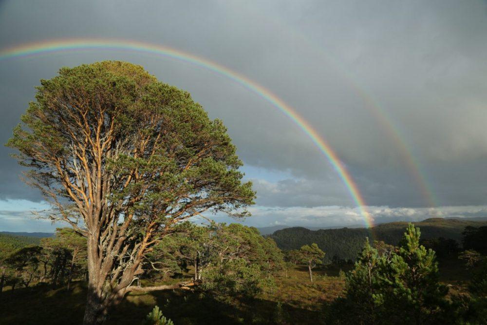 rainbow; double rainbow, Scots pine, Glen Affric, Caledonian Forest.