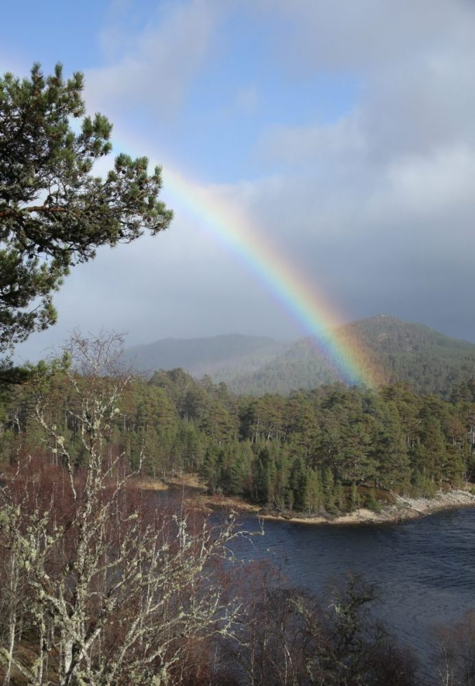Rainbow, Scots pine, birch, Caledonian Forest, Glen Affric, Scotland