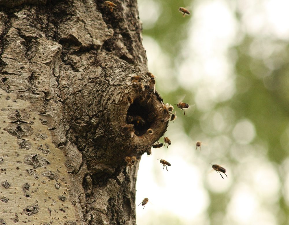 Trees and Bees Conference 19 March 2021