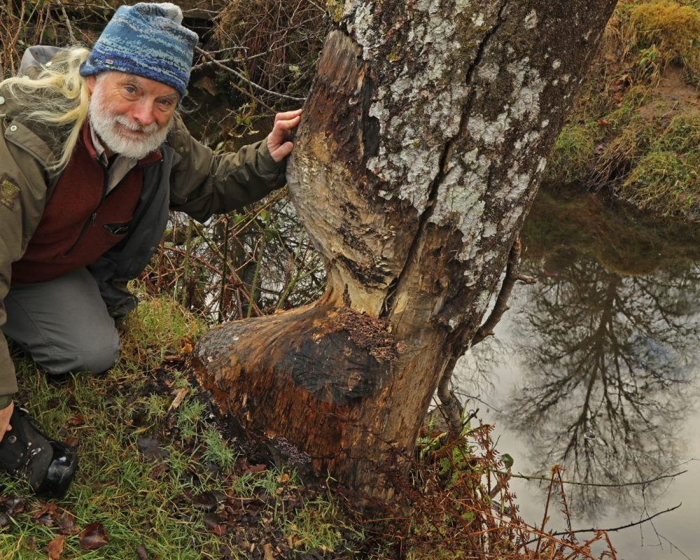 Beavers are still facing an uncertain future in Scotland